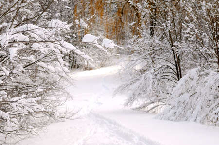 Path in winter forest after a snowfall Stock Photo - 2586976