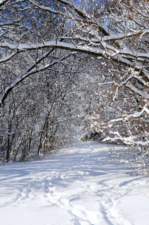 Path in winter forest after a snowfall Stock Photo - 2586996
