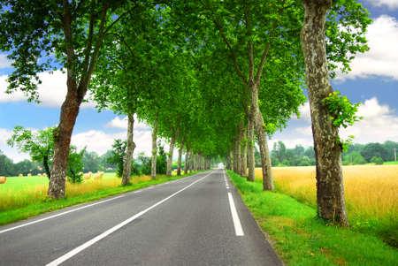 sicomoro: Strada fiancheggiata da alberi sycamore nel sud della Francia