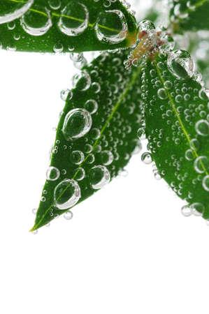 sumergido: Hojas verdes de una planta sumergida en el agua con burbujas de aire