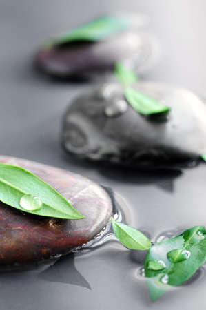 sumergido: Piedras sumergen en agua con hojas verdes y gotas de agua