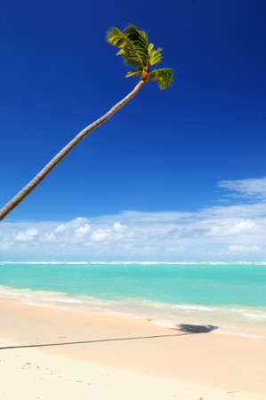Pristine tropical beach with palm tree in Dominican Republic photo
