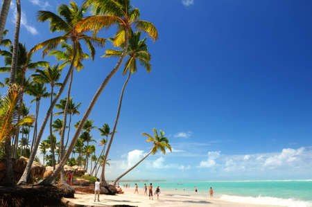 Tropical beach with palm trees on Caribbean island photo
