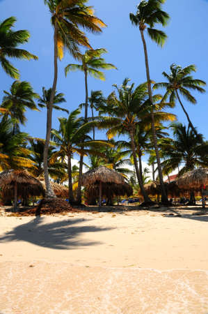 Tropical beach with palm trees and umbrellas on Caribbean island photo