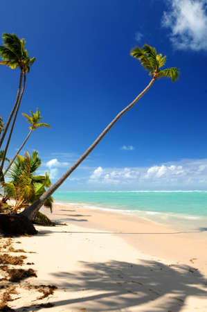 Pristine tropical beach with palm trees on Caribbean island photo