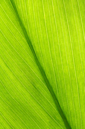 Green leaf of a troplical plant close up photo