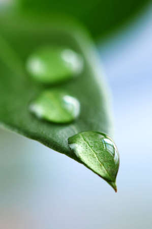 Macro of a green leaf with water drops photo
