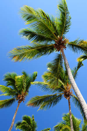 Palm tree tops on blue sky background