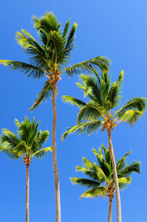 Sunlit palm trees on blue sky background Stock Photo - 2808737