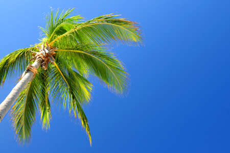 Background of bright blue sky with palm tree top photo