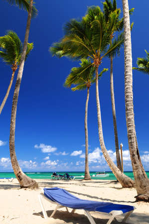 Sandy beach on Caribbean resort with tall palm trees photo