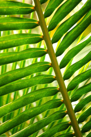Closeup of green leaf of tropical plant Stock Photo - 2808729