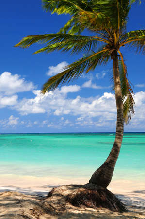 Sandy beach of a tropical island with palm tree photo