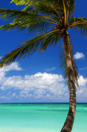 Scenic view on Caribbean sea with palm tree photo