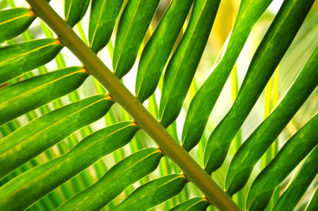 Closeup of green leaf of tropical plant photo