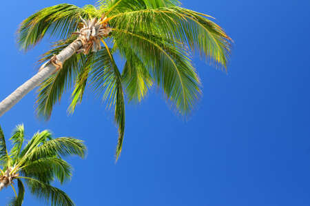Tropical background of palms on blue sky Stock Photo - 2853193