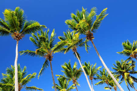 Lush green palm trees on blue sky background Stock Photo - 2853208