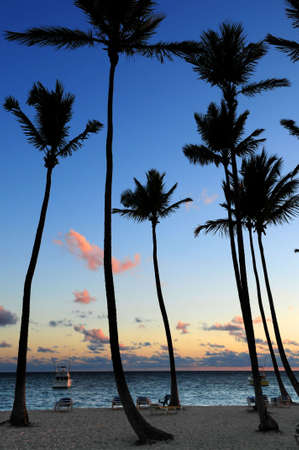 Palm trees silhouettes at sunrise at tropical resort photo