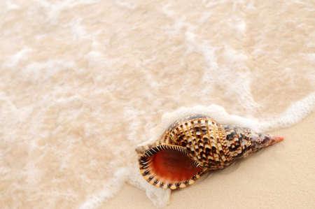 Seashell and ocean wave on sandy tropical beach photo