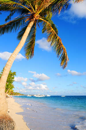 Tropical sandy beach with palm trees and fishing boats