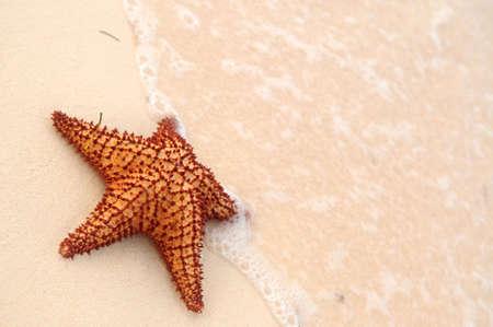 Starfish and ocean wave on sandy tropical beach photo