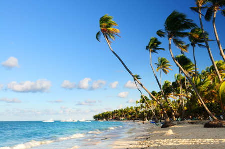 Tropical sandy beach with palm trees in Dominican republic photo