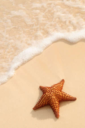 Starfish and ocean wave on sandy tropical beach photo