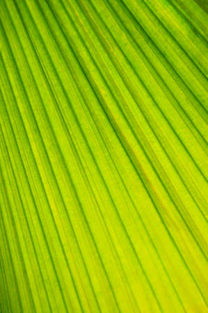 Botanical abstract background of green leaf of tropical plant Stock Photo - 2923944