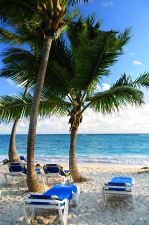 Sandy beach of tropical resort with palm trees and reclining chairs photo
