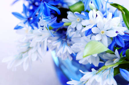 Blue bouquet of first spring flowers closeup Stock Photo - 3010108