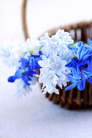 Blue bouquet of first spring flowers in a basket closeup Stock Photo - 3010071