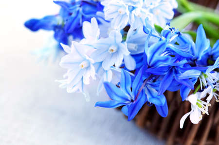 Blue bouquet of first spring flowers in a basket closeup photo