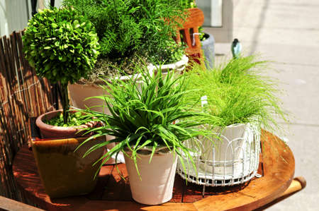 clay pot: Potted green plants on wooden patio table Stock Photo