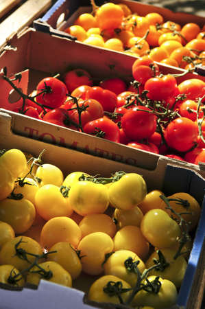 Colorful tomatoes for sale on farmers market photo
