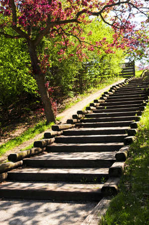 Wooden stairway in a spring park with blooming apple tree photo