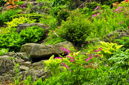 Rock garden with various plants and flowers photo