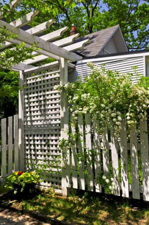 White trellis and fence with flowering bridal wreath shrub in a garden photo