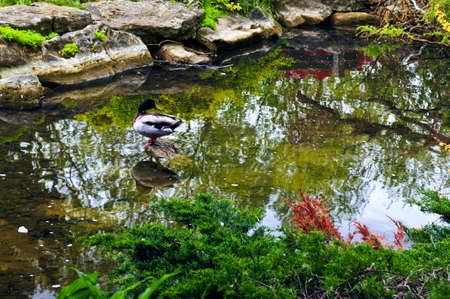 Pond with natural stones in japanese zen garden