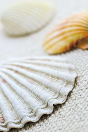 Background of several colorful seashells close up Stock Photo - 3375609