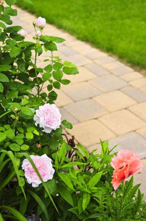 zpevněné: Lush blooming summer garden with paved path Reklamní fotografie
