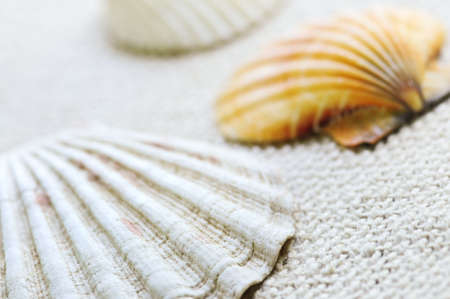 Background of several colorful seashells close up Stock Photo - 3408716