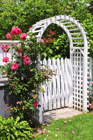 White arbor with red blooming roses in a garden photo