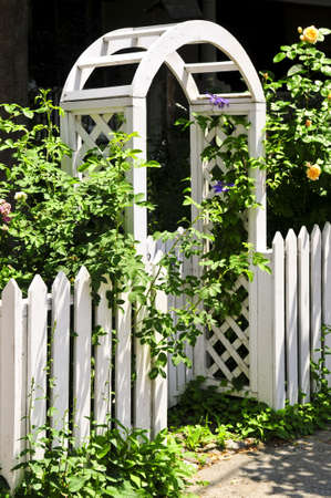 White arbor with blooming roses in a garden photo
