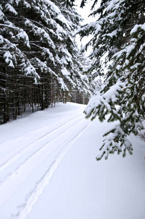 snowmobile: Winter landscape with snowy trees and snowmobile path