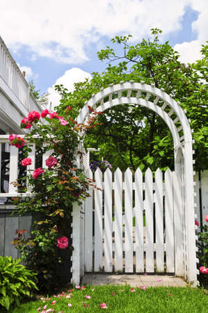 latticework: White arbor with red blooming roses in a garden