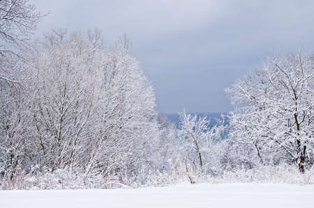 Winter landscape with snow covered trees and gray sky photo