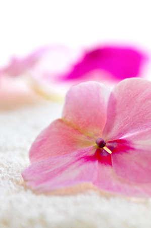 Gentle fresh flower on luxury towel close up 版權商用圖片