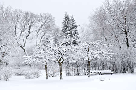 Winter park landscape with snow covered trees Stock Photo - 3531691