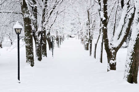 Lane in winter park with snow covered trees Stock Photo - 3531686