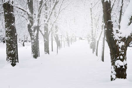 Lane in winter park with snow covered trees Stock Photo - 3544297